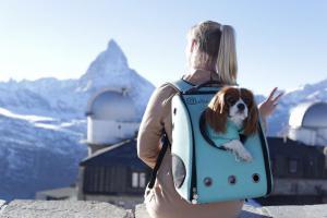 Любите путешествовать со своей собакой? Топ-10 лучших европейских направлений