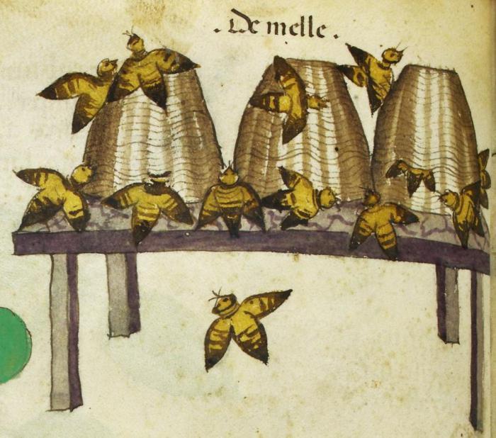 Пчелы птицы