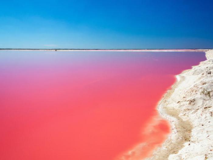 розовый водоем