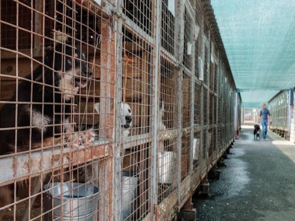 Почему в Москве нет бродячих собак и как решить проблему в других регионах