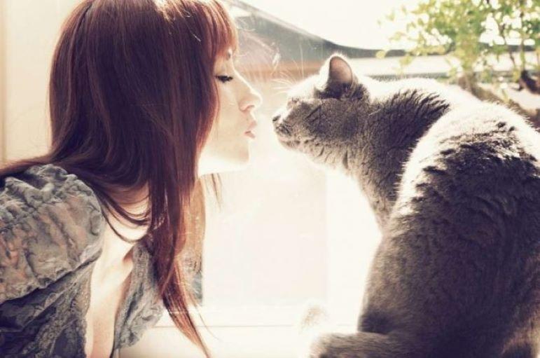 Почему нельзя целовать кошек: что говорят врачи и народные приметы