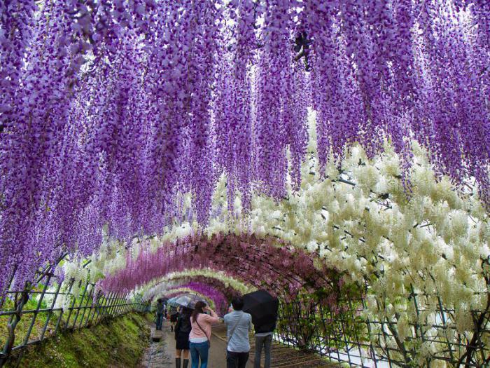 цветущий японский сад