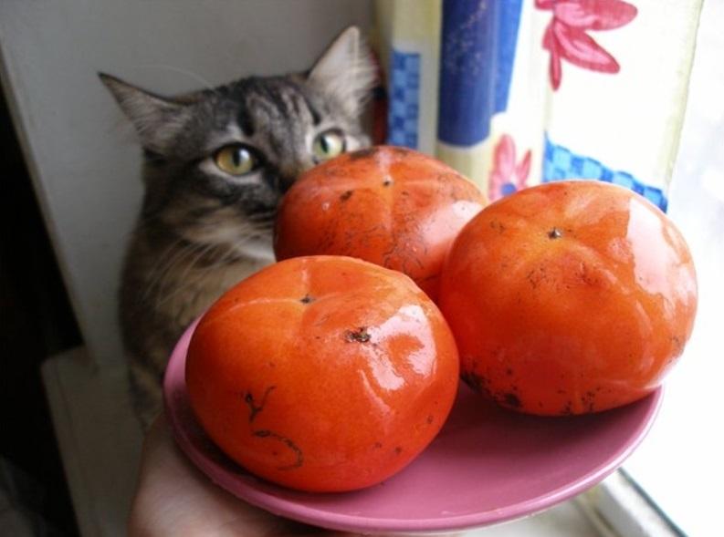 Речь не о свежей рыбе и молоке. Человеческая пища, которую не должна пробовать кошка (ни грамма)