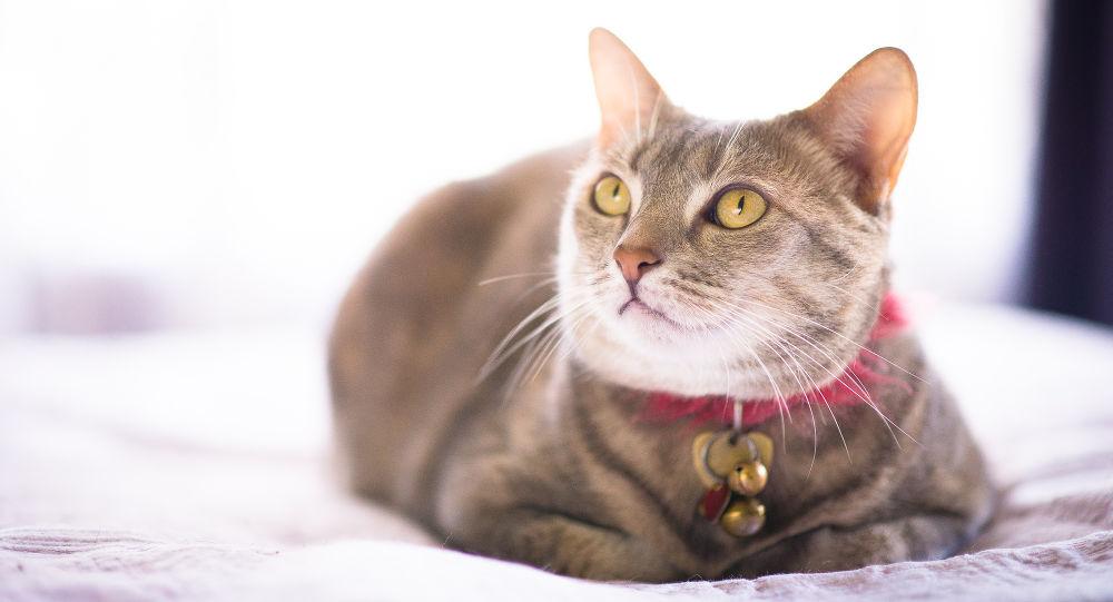 Кошка и ошейник: зоопсихолог объяснил, почему его нужно снять раз и навсегда
