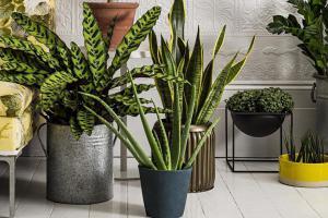 Какие растения стоит выбирать для каждой комнаты в вашем доме