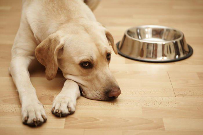 у собаки понос 5 дней брюнетку ебут