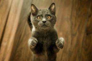 Почему кот стоит на задних лапах: 6 причин