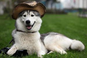 5 пород собак, которые очень сильно линяют