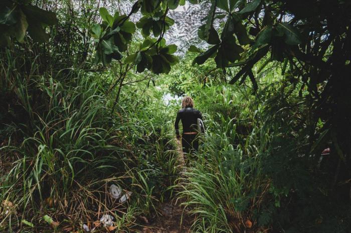 джунгли лес