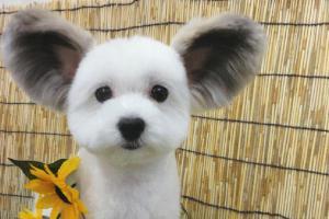 Интернет в восторге от этой очаровательной собачки с ушами, как у Микки-Мауса