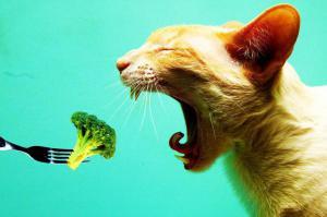 Почему вы должны есть брокколи каждый день