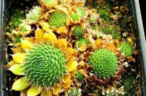 Идеальные фото природы, которые могут порадовать любого перфекциониста
