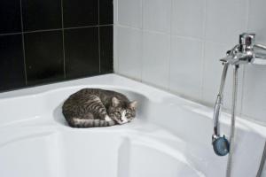 Почему животные идут за вами в ванную?
