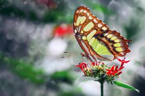 Как научиться видеть красоту в мелочах, или Искусство, созданное природой