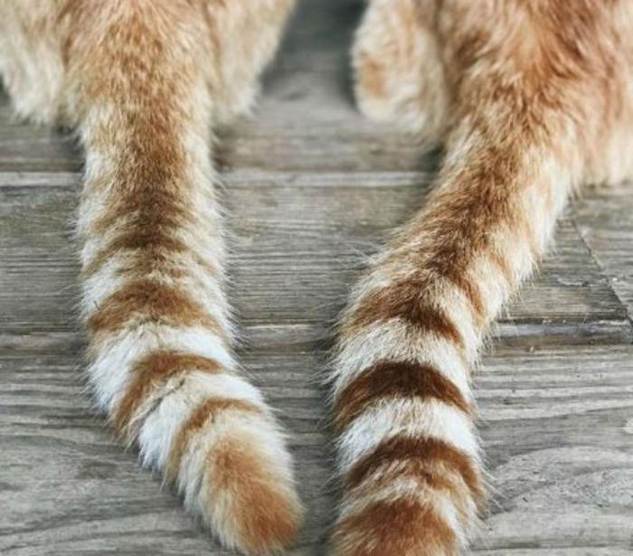 Хвост кота картинки