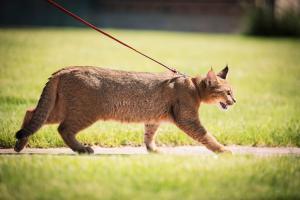 Настоящий кото-пес у вас дома!
