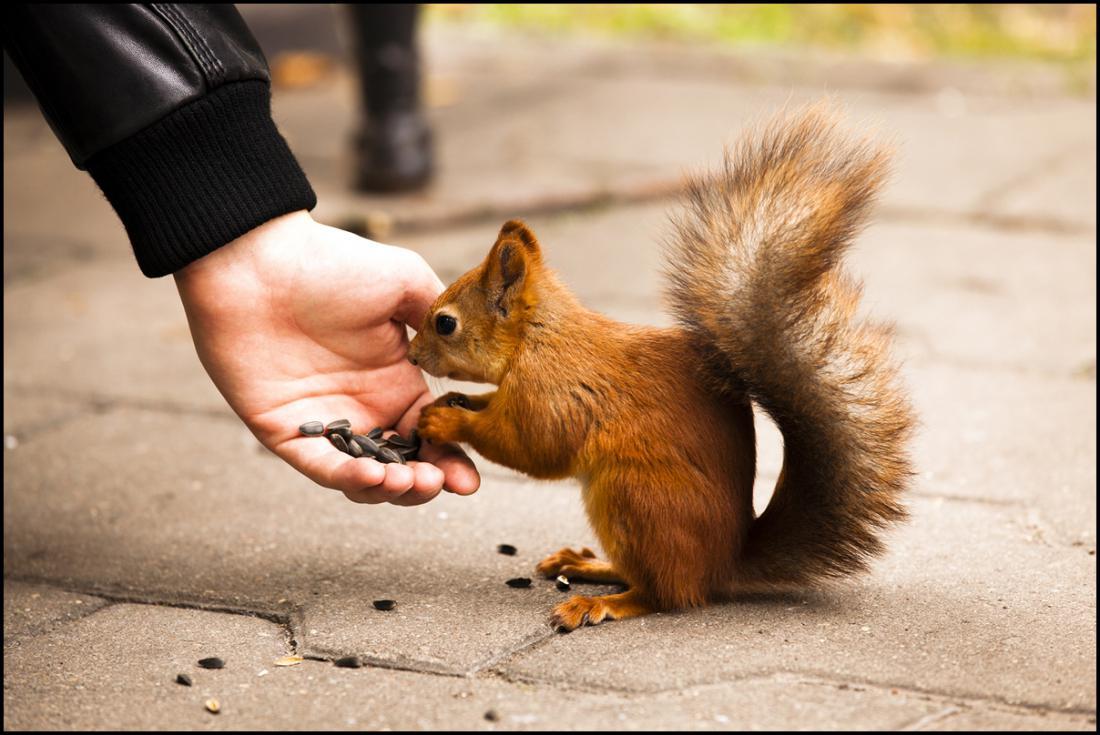 ходе картинки человек кормит животных каждый день