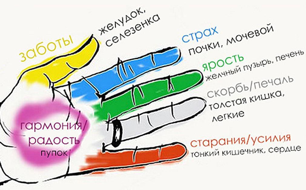 219С каким органом связаны пальцы рук