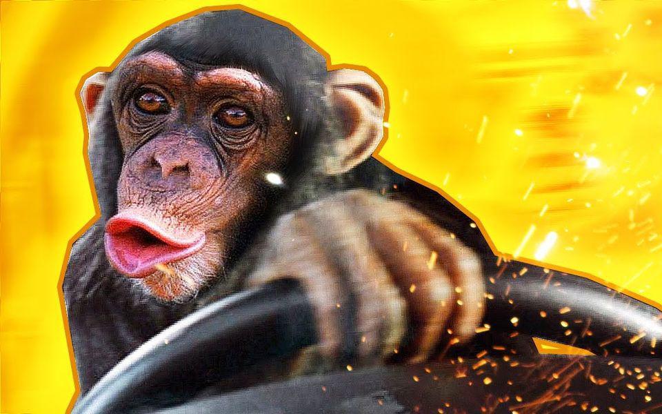 картинка обезьяны в машине солнца пронзают тысячи