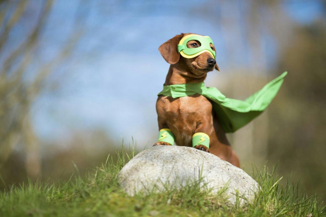 того, супергерои животные фото большинство