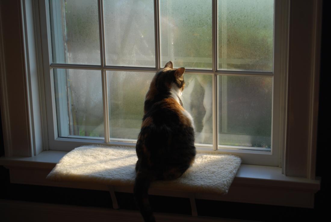 фото кошек смотрящих в окно будешь