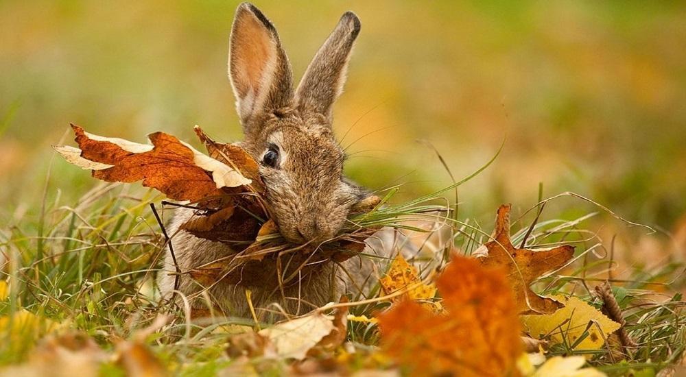 картинки зайчики листопаднички