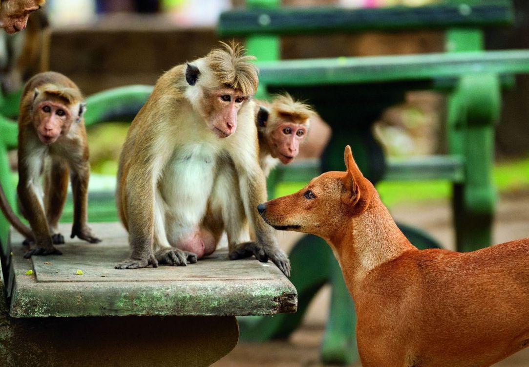 смешные картинки про собак и обезьян профессии модели дизайнера