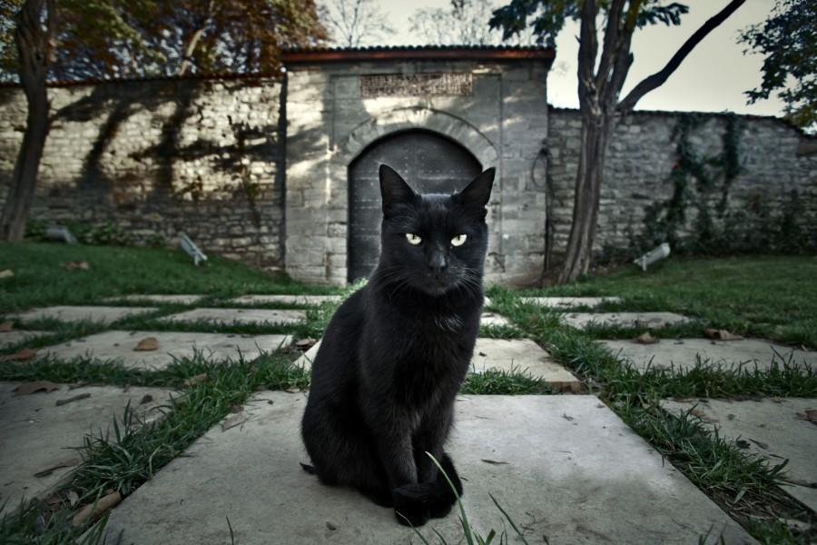 Картинки примета черная кошка