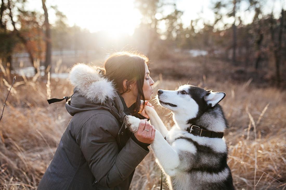 Картинки собак и людей
