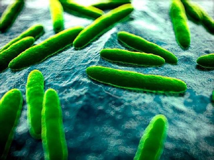 Микроорганизмы, считающие наш организм своим домом