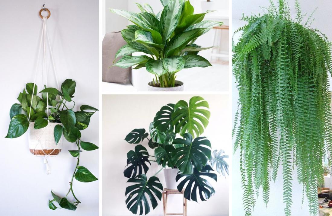 какие комнатные растения полезно держать дома фото кино, например