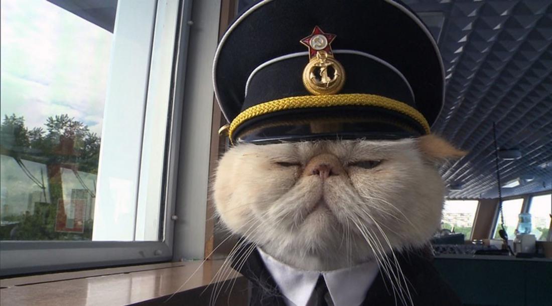 знаменитости капитан смешные картинки самом