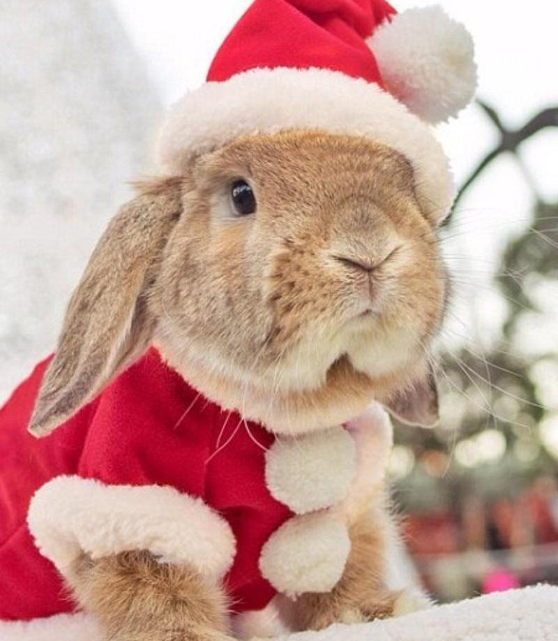 Картинки кролики к новому году