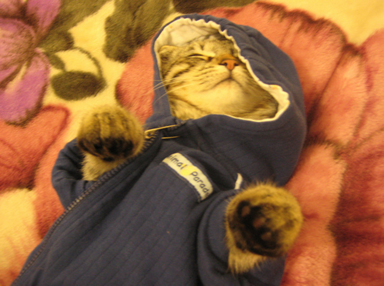 Последний звонок, смешная картинка кота перепутали с капюшоном была часто в вк