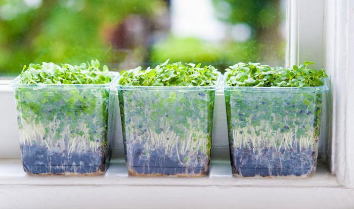выращивать дома