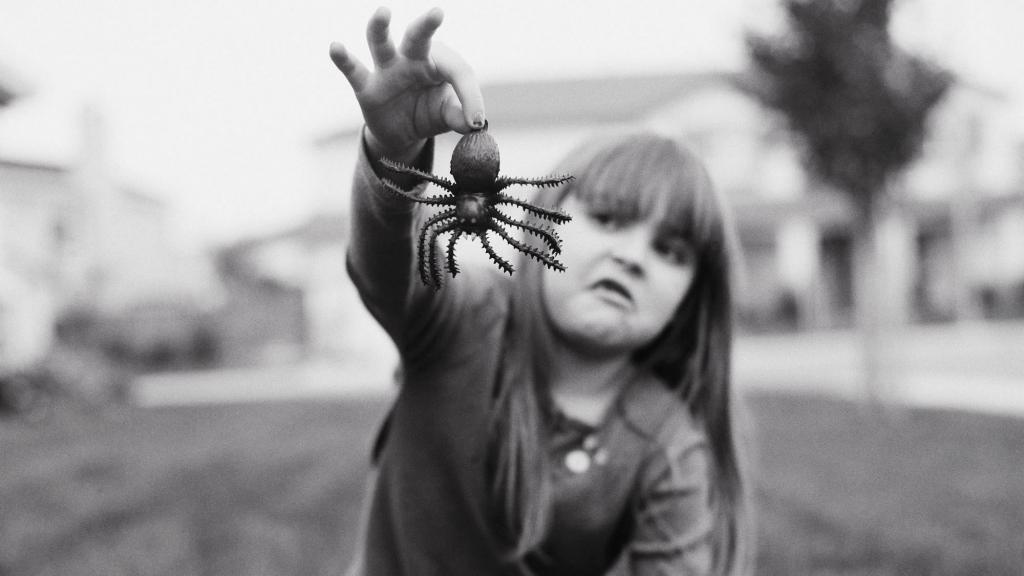 Почему на самом деле мы боимся пауков: 7 реальных причин