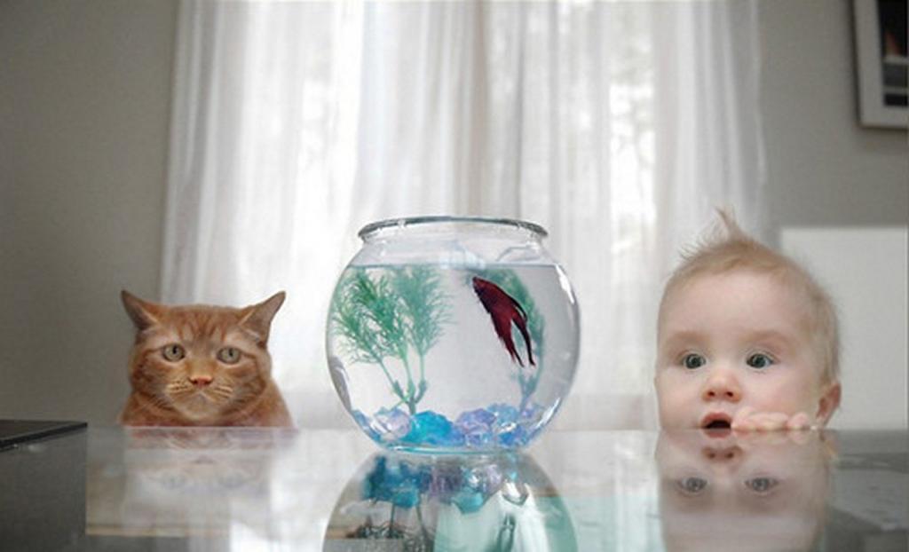 является картинка кот у аквариума с рыбками менее