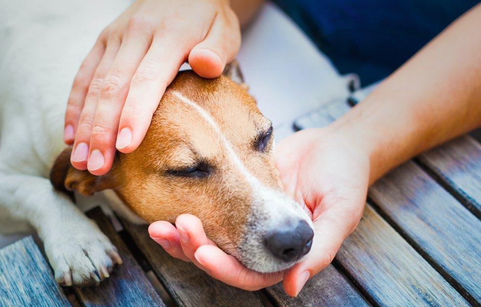 6 распространенных мифов о собаках, в которые многие люди верят до сих пор