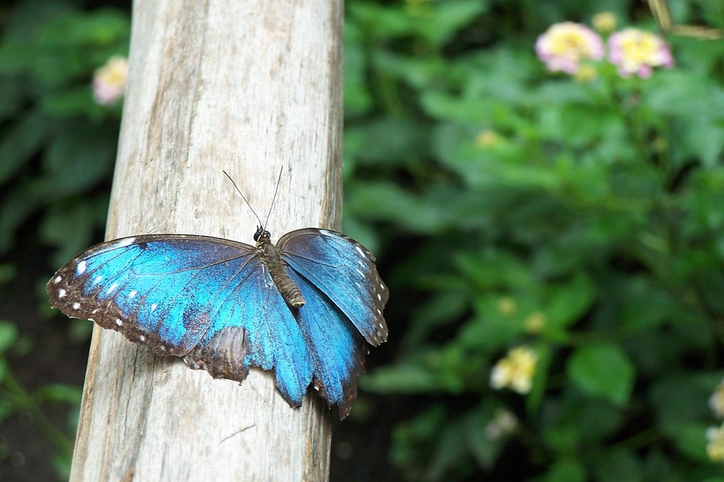 Прелести экотуризма в Гондурасе: на местной ферме разводят более 40 видов тропических бабочек