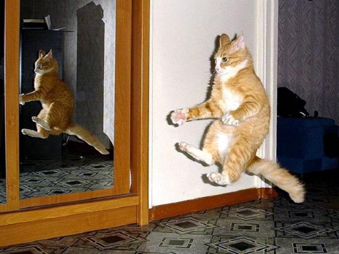 Коты в момент похищения НЛО: забавная фотоподборка