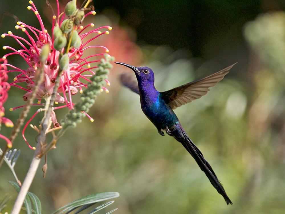 расцветки колибри фото привожу фото местных