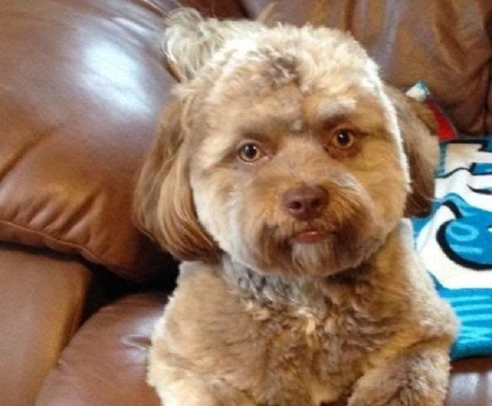 сделать так, собака с лицом человека фото порода крючком вещи