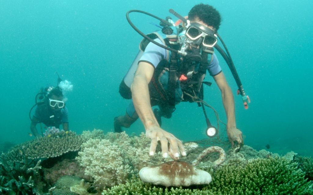 Морские огурцы: почему многие рискуют жизнью, добывая их