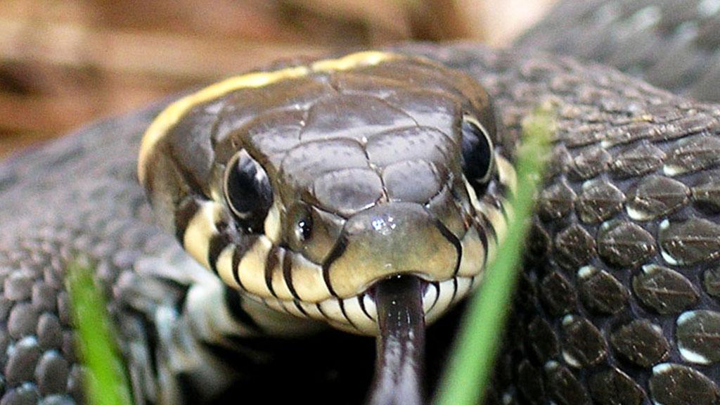 Большинство людей не могут увидеть змею на этой фотографии