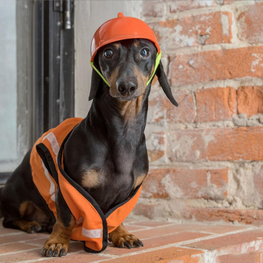 """""""Собачья работа"""": фото собак, одетых как люди"""