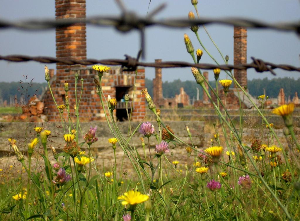 Холокост: что случилось с узниками концлагеря после освобождения?