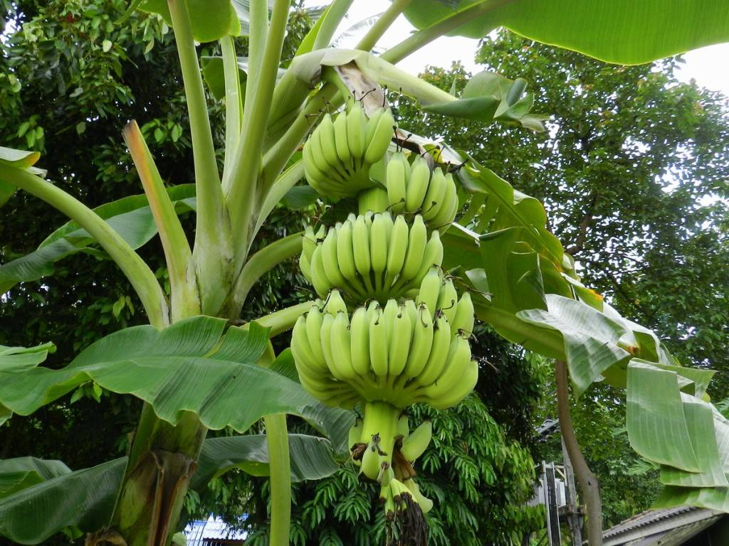 ткань бананы в природе фото актрису зрители полюбили
