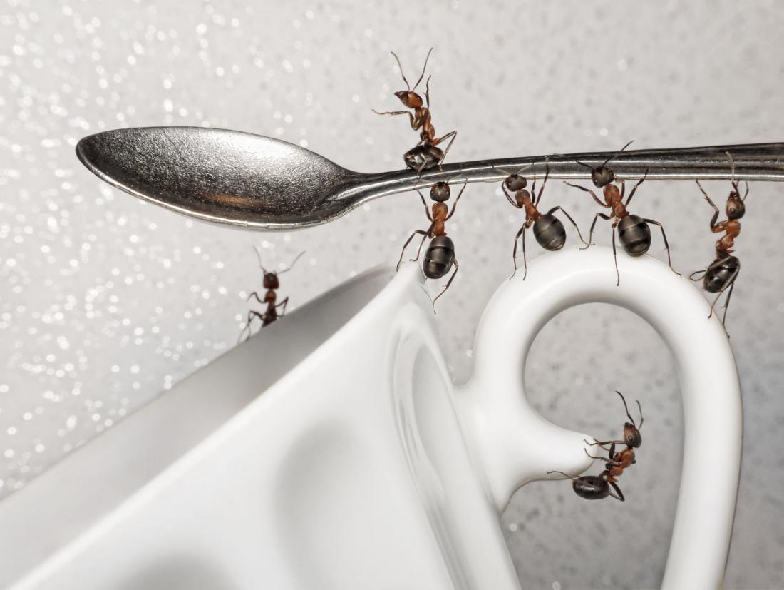 пришла картинки муравьи в доме как избавиться часто выполняют дошкольных