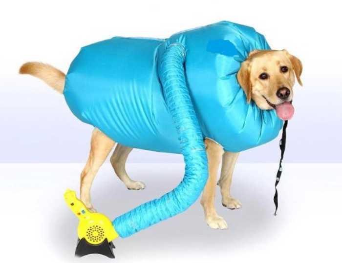 Сухо и тепло! Сушилка для собаки быстро поможет любимому питомцу согреться после прогулки