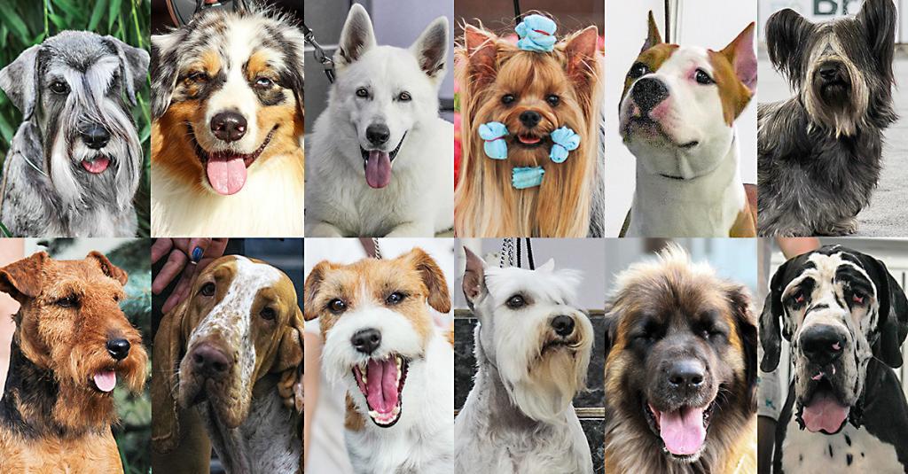 Большие собаки против маленьких: ученые выяснили, кто умнее